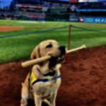 PenFed Celebrates Canine Companions at Nats Park